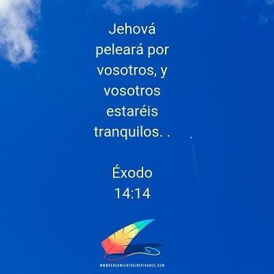 Jehová peleará por vosotros, y vosotros estaréis tranquilos