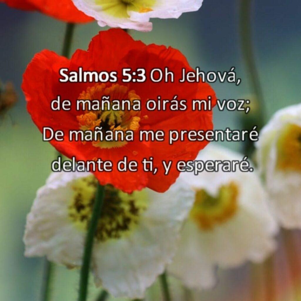 Versículos acerca de esperar en Dios